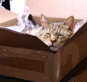 Roscoe box inspector